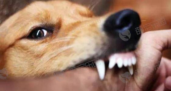 狂犬病早期有什么症状?
